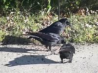 birds on path