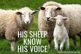 his-sheep-know-his-voice