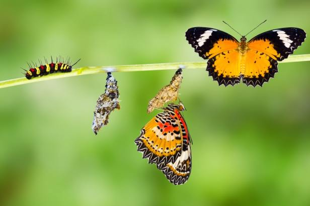 there-has-been-a-change-caterpillar-to-butterfly